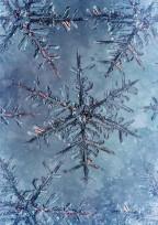 鬼滅の刃「雪柱の悲痛」