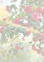 sasanqua ~永遠の愛~