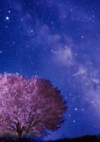 星柱様魔法の世界へようこそ♮