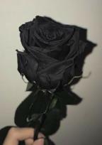 黒バラ=復讐