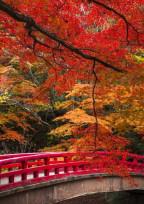 紅葉が織り成す8つの光