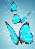 1匹の蝶が亡くなって…《参加型》