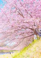 あの桜の木の下で