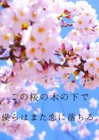 この桜の木の下で僕らはまた恋に落ちる。