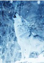 ~人狼〜SKSN……