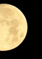 月の兎は闇夜に踊る