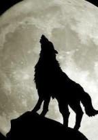 人狼ゲーム🐺🔪