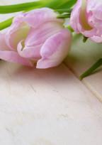 薔薇短編集 。