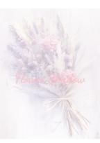 花 影   〜 花 か ら の メ ッ セ ー ジ を 〜