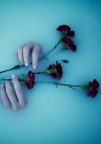 舞い落ちる花びら