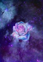 Purple Rose🥀