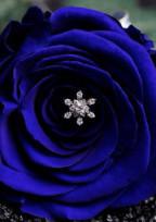 殺し屋と青薔薇