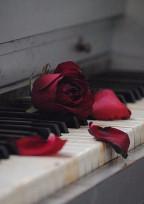 枯れた花に愛の告白を