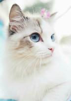 その猫、私です!?