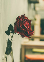 桃黒の恋。