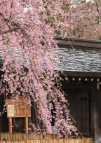 桜舞、鳥歌、風音、月恋