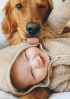 犬 と 我 が 子 に 嫉 妬 。