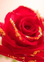 薔薇色の人生