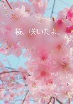 桜、咲いたよ。
