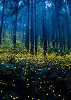 ようこそ…願いの森へ