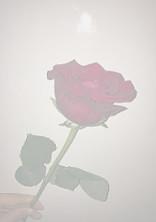 108の薔薇