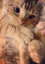 俺の彼女orお兄ちゃんは猫人間🐱