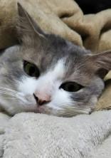 癒し猫写真提供所