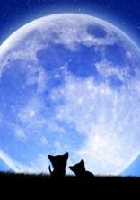 今夜は月が綺麗ですね…。