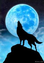 狼の少女と狼の少年とwrwrd