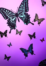 私は今日も蝶屋敷で。
