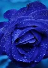 嗚呼、君が薔薇色になるなんて