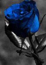 薔薇のトゲのお姫様。