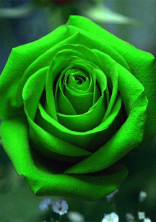 イメージカラー緑は受けです!by夢雲