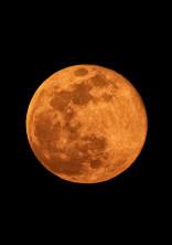 満月の夜に🐰🌕