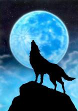 『男主』白狼学園🐺