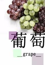 葡萄_grape_