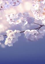 ドラゴン桜〜妄想〜