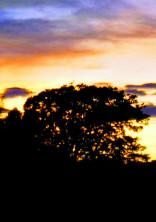 夕日が沈む前に