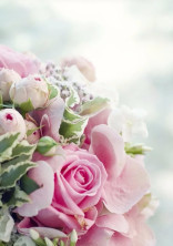 高嶺の花束Ⅱ