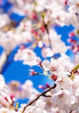 桜の季節に出会った先輩と後輩の私