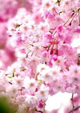 桜咲く〜作詞部屋〜