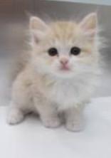 猫でも恋はする!!