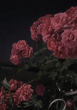 """"""" 好き """" でも失うもの  ─ 世界で1番 、君を愛してました ─"""