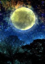 月夜の歌姫