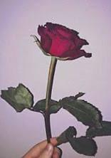 薔薇色の糸