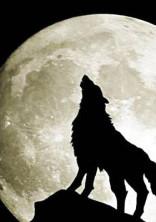 人狼ゲーム🐺