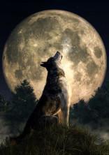 私と狼の恋