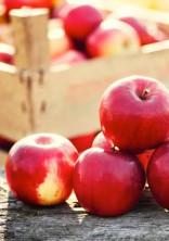 りんごの部屋