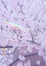 3年目の桜の散る頃、君はどこへ行きますか?