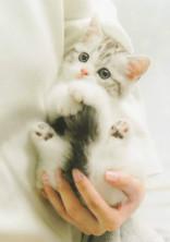 私は猫です。